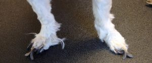 How and When You Should Cut Your Dog's Nails